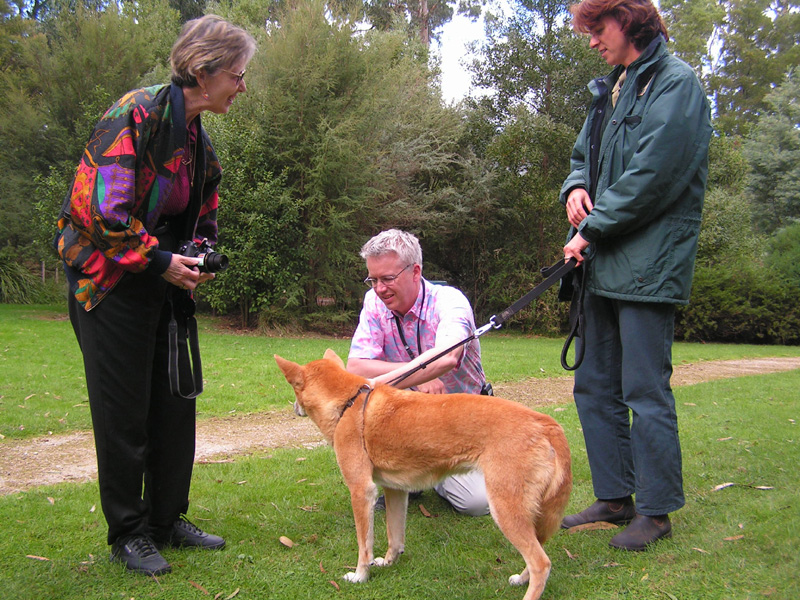 AU 05 COUNCIL Heale dingo Alex