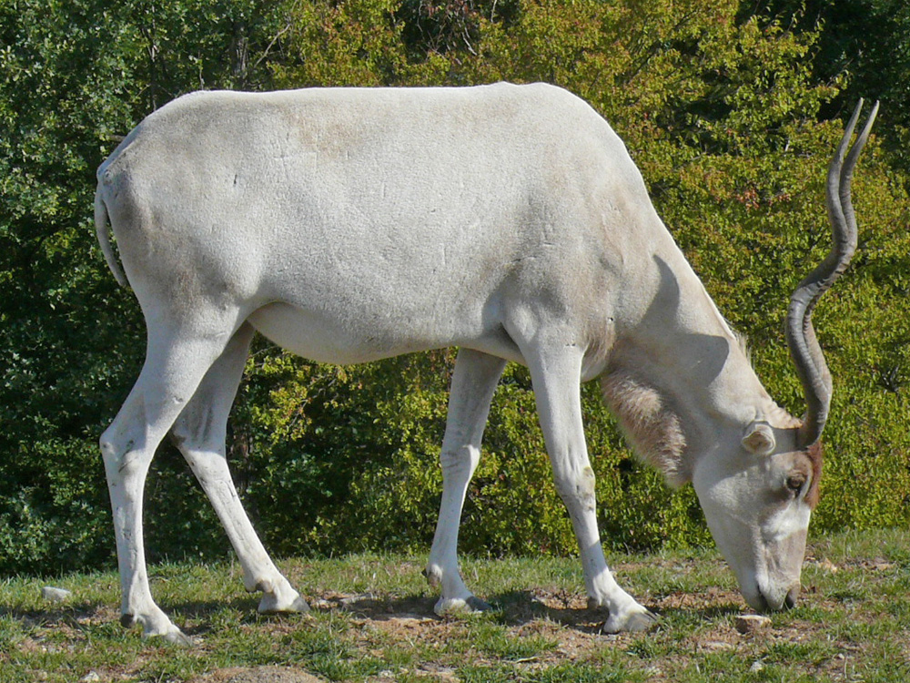 119 009 011 001 addax peaugres PD1