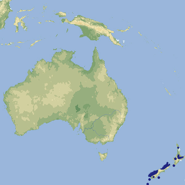 218 003 018 002 cyanoramphus auriceps map