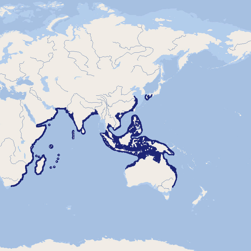 603 005 010 001 stegostoma fasciatum map